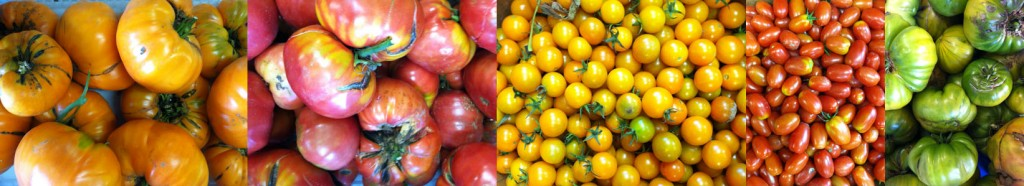 Heirloom Tomatos used in making Hermit Woods Tomato wine