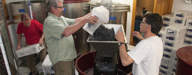 Crushing the Grapes at Hermit Woods winery