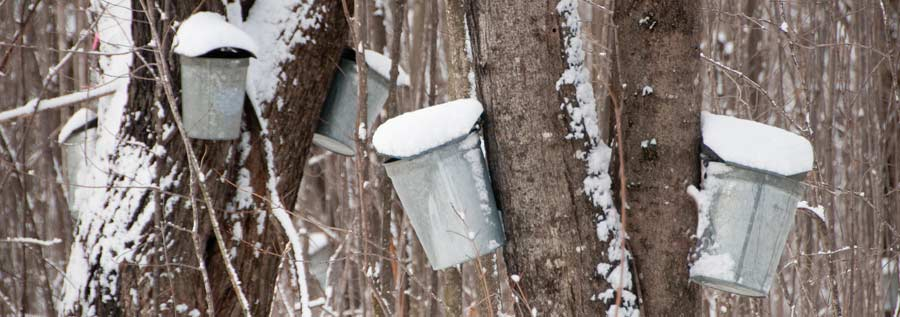 Maple Sugaring at Hermit Woods