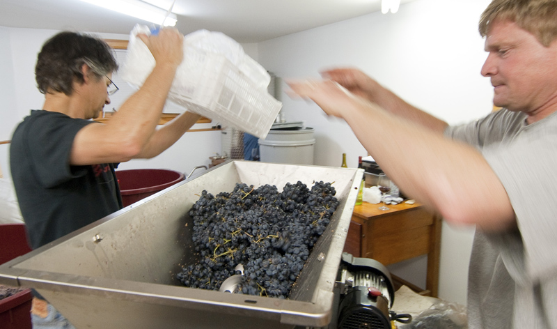 Hermit Woods Winery, crushing grapes