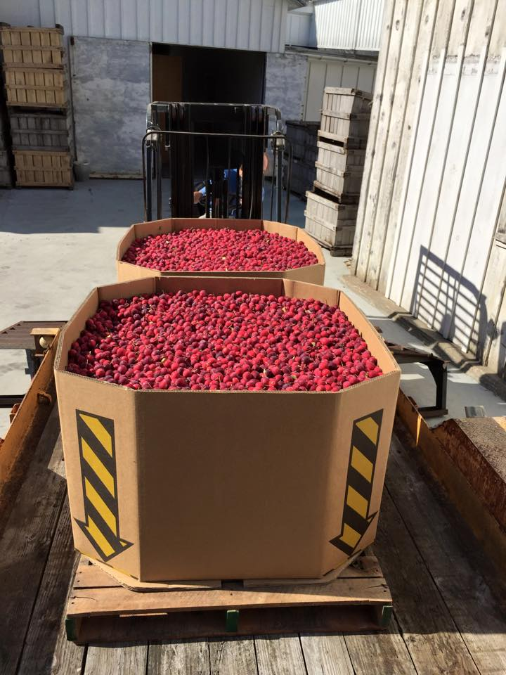 Dolgo Crabapples prepard for transport from Scott Farm in Vermont