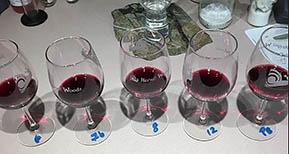blueberry-wine-tasting
